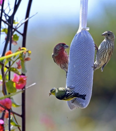 Beautiful songbirds in secure garden
